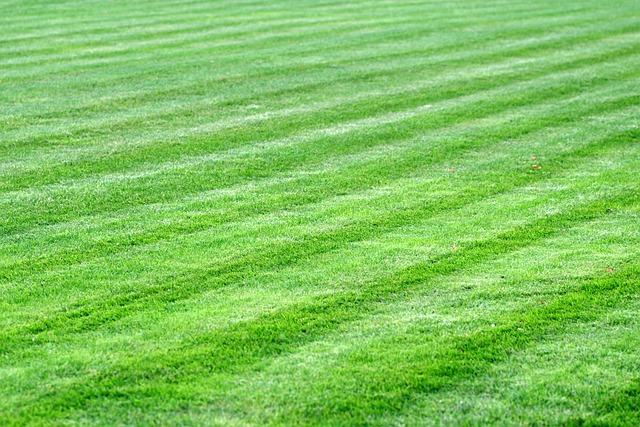 rodzaje trawy