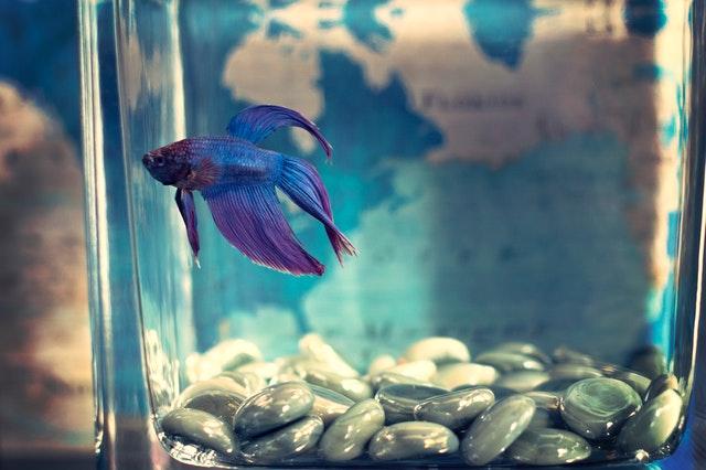 Naturalne ozdoby do akwarium