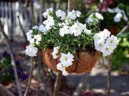 8 kwiatów doniczkowych, które kwitną na biało